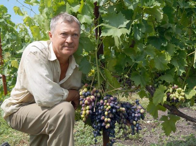 Виноград без преград